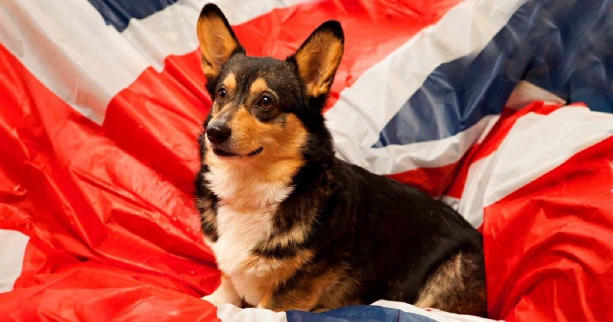 Английские породы собак
