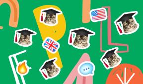 На фото зеленый фон и котики в шапках
