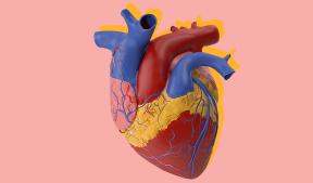 На фото изображено сердце